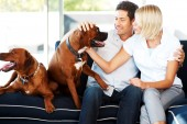 Pet Odor Removal American Steam-A-Way