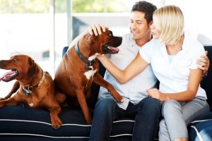 American Steam-A-Way Pet Odor Removal