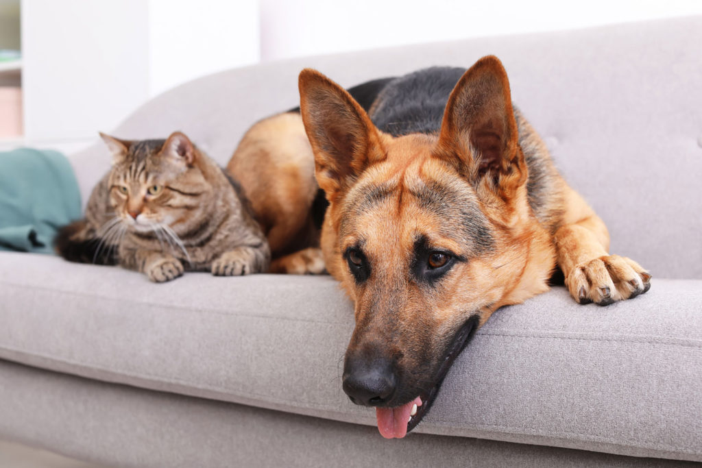 Pet Odor Removal Services